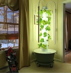 Fresh homegrown food regardless of climate and season. Dont have a suitable space to garden outdoors? The Tower Garden Led Grow lights! Allows you to easily grow leafy greens herbs and other non-fruiting crops indoors year-round! Grow Organic, Organic Plants, Organic Gardening, Lawn And Garden, Indoor Garden, Home And Garden, Juice Plus Tower Garden, Starting Seeds Indoors, Family Garden