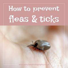 Help! How to prevent dog fleas