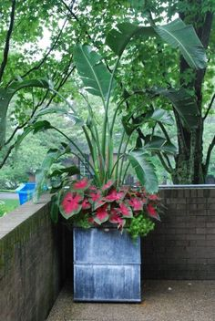 White bird of paradise, caladium, and sedum in a zinc garden container