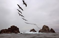 Image of the day -- WEDNESDAY, AUGUST 19: OLADAL ISLAND Pelicans fly over Oladal island in Lima, Peru on Tuesday, Aug. 18, 2015.