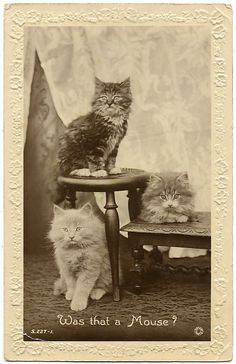 Vintage Cats Photo Card-probably after 1900....