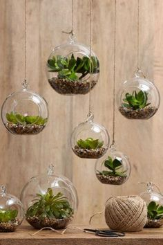 Hanging terrariums Create mini-garden worlds filled with your favourite small plants in hanging glass...