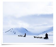 Dog sledding to Bolterdalen with Svalbard Husky Svalbard Norway, Longyearbyen, Scandinavian Countries, Extreme Sports, Sled, Wilderness, Vacations, Husky, Tourism