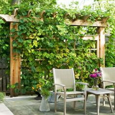 Patio Privacy Ideas | Patio Privacy Design Ideas, Pictures, Remodel, ... | Privacy Plantings