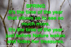 Enjoy these photo galleries of spring scenery. Spring Scenery, How To Find Out, Give It To Me, Spring Pictures, Thoughts, Ideas