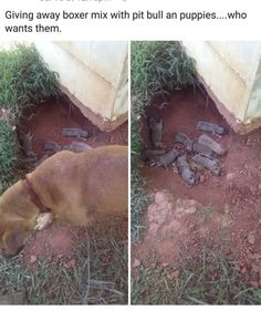 video view dog hides her puppies in a ditch to keep them safe until help arrives dedfaaaa