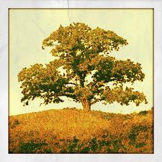 Tree cartoonizer