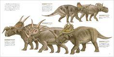 Centrosaurus apertus; Late Cretaceous (76.5 - 75.5 Ma); Discovered by Lambe, 1904