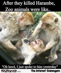 42 best harambe images on pinterest harambe meme dankest memes