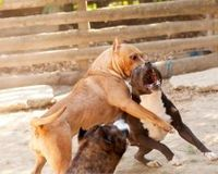 Tell Tennessee to Raise Penalties for Animal Fighting!