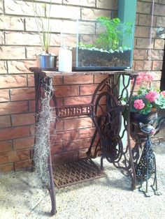 (Recycled fish tank) ( Recycled sewing wheel) (City gardening)