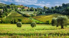 CHIANTI, SAN GIMIGNANO & WINE ROADS (departure from Florence): Full day tour in the #Chianti region and in San Gimignano, with a wine tasting. Discover details: http://www.sunnytuscanytours.com/gestione/view.php3?DB1_lingua=ENG&DB1_codice=1501&pagout=scheda_ENG.html&DB2_tag=Daily%20Tours