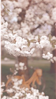 Beautiful white blossom in the spring. Vertical video clips by Xanthe Berkeley. Aesthetic Movies, Sky Aesthetic, Aesthetic Videos, Aesthetic Vintage, Wallpaper Nature Flowers, Ocean Wallpaper, Live Wallpaper Iphone, Beautiful Fantasy Art, Beautiful Gif
