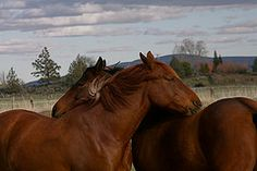Dakotah's horses