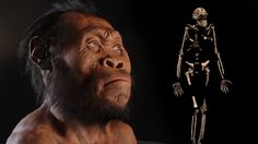 Within a deep and narrow cave in South Africa, paleoanthropologist Lee Berger and his team found fossil remains belonging to the newest member of our human family. The Homo naledi discovery adds another exciting chapter to the human evolution story b. Homo Habilis, Anthropologie, Human Family Tree, 50 Cm3, Face Change, Early Humans, Human Evolution, Recent Discoveries, Ancient History