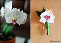 Orchids. Charming and Cute Coffee Filter Crafts