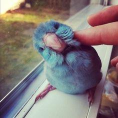 Un tweet salido del nido... XDXD
