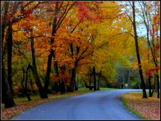 Autumn in Grove City PA Town And Country, Country Roads, Places To See, Places Ive Been, Mercer County, Grove City, Lovely Smile, Autumn Nature, Happy Colors