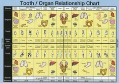 Tooth and Organ Relationship Chart. Every organ and every part of your body is directly linked to a specific tooth or area of the mouth via these meridians, or energy highways. When the health of the tooth is compromised, it affects a certain area of th Health Heal, Oral Health, Dental Health, Holistic Medicine, Natural Medicine, Arthritis, Autogenic Training, Chakras, Tooth Chart