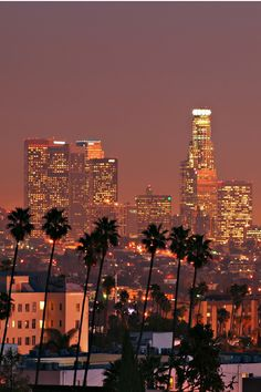 Los Angeles, California #LA #Palms