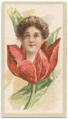 Beauties - Flower Girls ~ British American Tobacco Co. Vintage Ephemera, Vintage Postcards, Pansies, Tulips, British American Tobacco, New York Public Library, Woman Painting, Vintage Advertisements, Flower Children