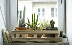 With winter weather keeping us inside, we took inventory and came up with a list of our editors' 10 favorite Ikea accessories and (plants) for indoor garde