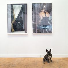 Are you my friend? Arne Svenson at Julie Saul Galery at Miami Project. #picklebeholding #pickledog #frenchie #bulldog #artdog #dogsofinstagram #artselfie #arnesvenson #juliesaul #juliesaulgallery...