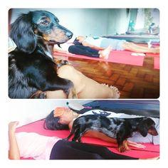Yoga Dog .... Yoga Dog, Dogs, Animals, Animales, Animaux, Pet Dogs, Doggies, Animal, Animais