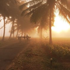 .... a beautiful morning driving around the countryside near Mysore, India.