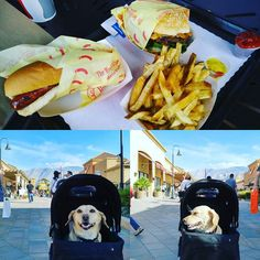 Eating and shopping on Easter.  #corgi #corgicommunity #dogsofinstagram #shopping #corgidor. #easter #foodporn #gourmetburger by jeescalante