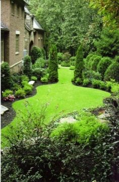 layering evergreens and shrubs in backyard - would be good along a fence