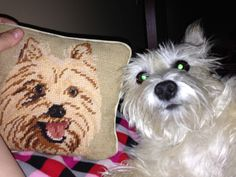 Tazzy and her cairn terrier pillow