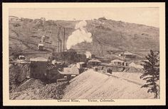Cresson Mine, Victor, CO, Cosmos Postcard, undivided back, circa 1900s