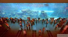 amazing Dubai mall aquarium