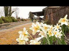 Galway Video news. Quiet man Video News, Wedding Ceremony, Restoration, Board, Planks