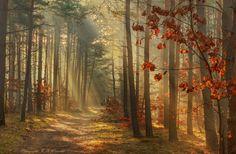 Forest in the sun... by Krzysztof Winiarski on 500px