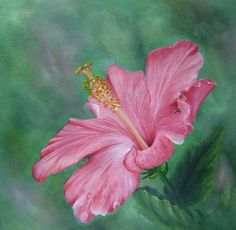 pink hibiscus, acryl paint, acrylic paintings, acrylics, clarks, hibiscus flower, art apprentic, paint pattern, painting patterns