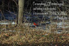 Thanksgiving Cardinal For everything God created is good, and nothing is to be rejected if it is received with Thanksgiving. 1 Timothy 4:4 Photographic print greeting card available for purchase