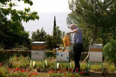 bees © Éric Tourneret this man uses bees for his Multiple sclerosis and has been in remission for 25 years. Travel Pictures, Travel Pics, I Love Bees, Bee Farm, Bee Friendly, Beneficial Insects, Save The Bees, Bee Happy, Bee Keeping