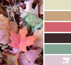 leaf palette (via Bloglovin.com )