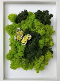 Scandinavian moss wall art and paper quilling, Paper butterfly, Butterfly and moss, Reindeer moss, W Moss Wall Art, Moss Art, Wall Art Decor, Quilled Paper Art, Paper Quilling, Moss Decor, Paper Butterflies, Quilling Techniques, Plant Wall
