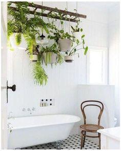Cheap Plants, Cool Plants, Ivy Plants, Jade Plants, Succulent Plants, Green Plants, Cactus Plants, Hanging Plants, Indoor Plants