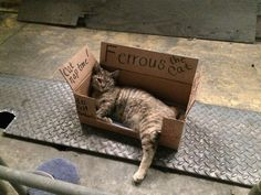 I work in a steel processing plant. This cat showed up a week ago. We named her Ferrous and this is her box!