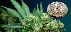 Buy Marijuana seeds with bitcoin online! http://bitcoinmarijuanaseeds.com/