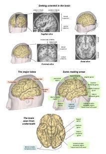 Reading in the brain dehaene