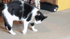 gatto che fa la capriola animata
