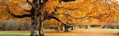 En busca del verde secreto: El cardo ya era considerado un alimento de lujo por los romanos, que lo reservaban para las clases más altas. Aunque es poco consumido en Europa, en Navarra es uno de los manjares más reconocidos y comunes de su gastronomía.