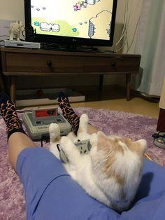 Game-playing kitty!