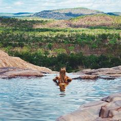 Darwin - There's really no place you'd rather be than Gunlom Falls, Kakadu National Park. After a day of exploring swim to infinity in the natural plunge pool. Best Places To Travel, Places To See, Kakadu National Park, National Parks Map, Holiday Places, Plunge Pool, Australia Travel, Travel Inspiration, Tourism
