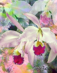 Orchid Allure by Melinda Bradshaw